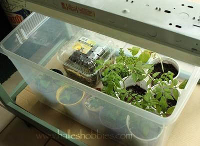 WIP seedlings