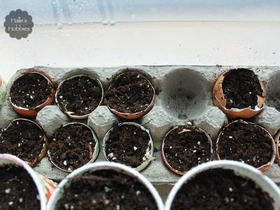 seed starting | Halle's Hobbies