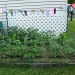 T Tuesday: late June garden edition