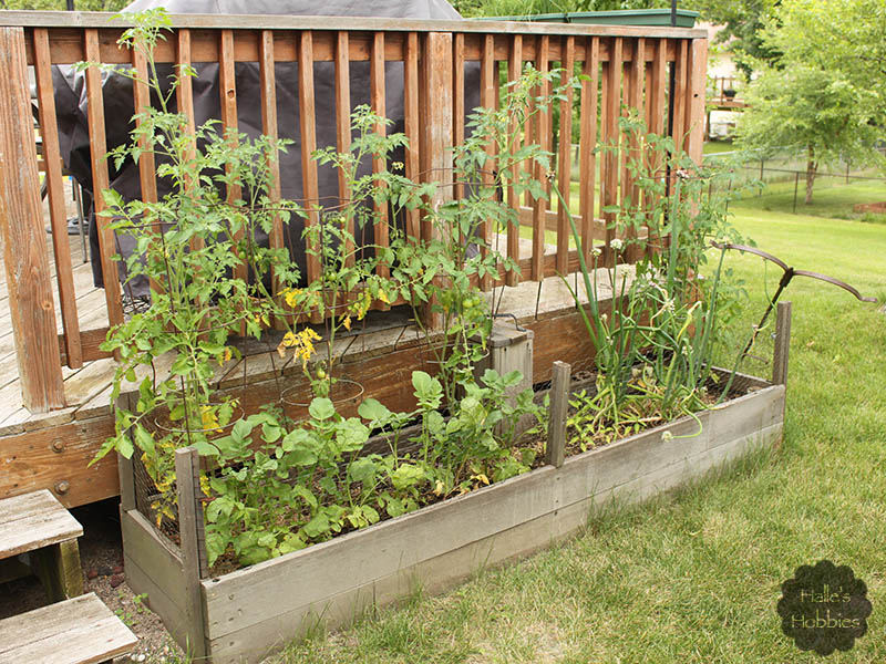 T Tuesday: gardens and more edition